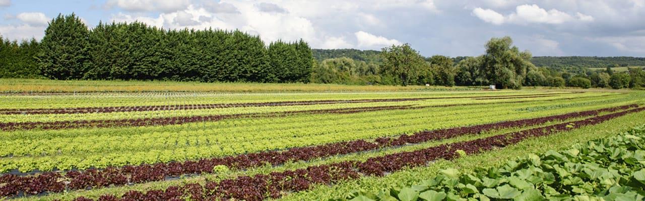Hockey Rouen Calendrier.Calendrier Des Fruits Et Legumes Produits En Normandie